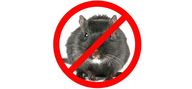 Manuale gratuito di tecniche di derattizzazione per non farsi più fregare dai topi.